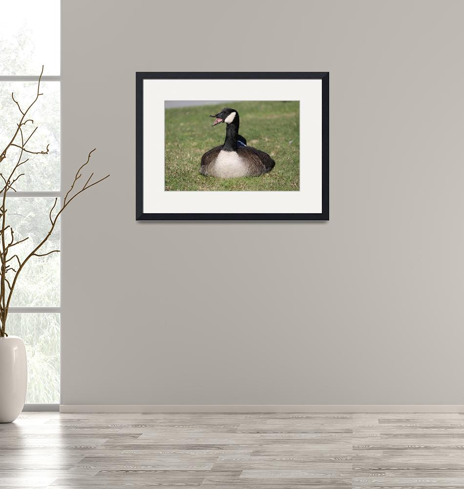"""""""Canada Goose""""  by DonBakerPhotography"""