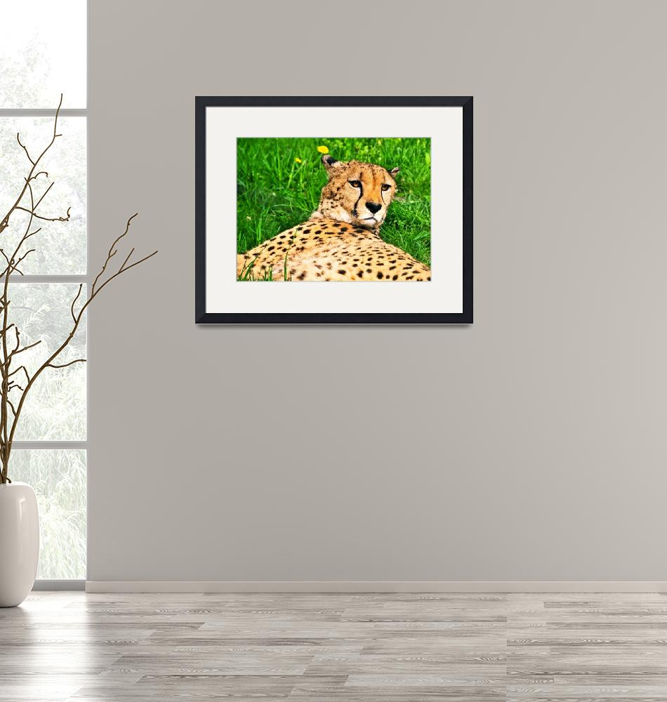 """Relaxed Cheetah""  (2013) by amira"