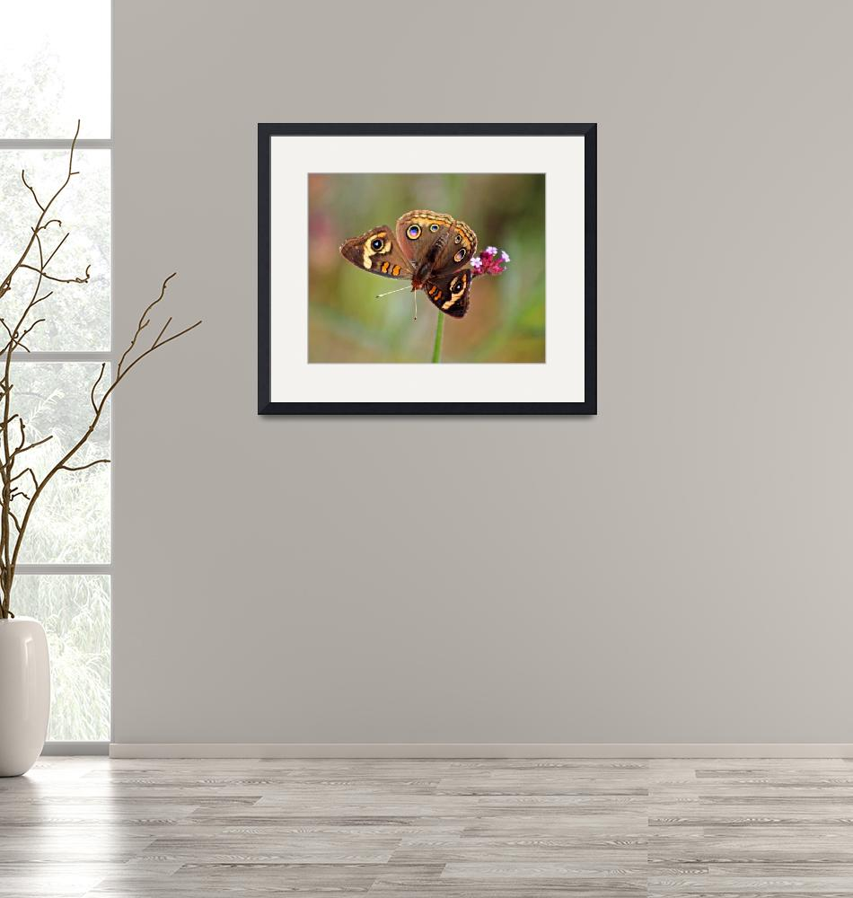 """Butterfly   Common Buckeye""  (2011) by KsWorldArt"