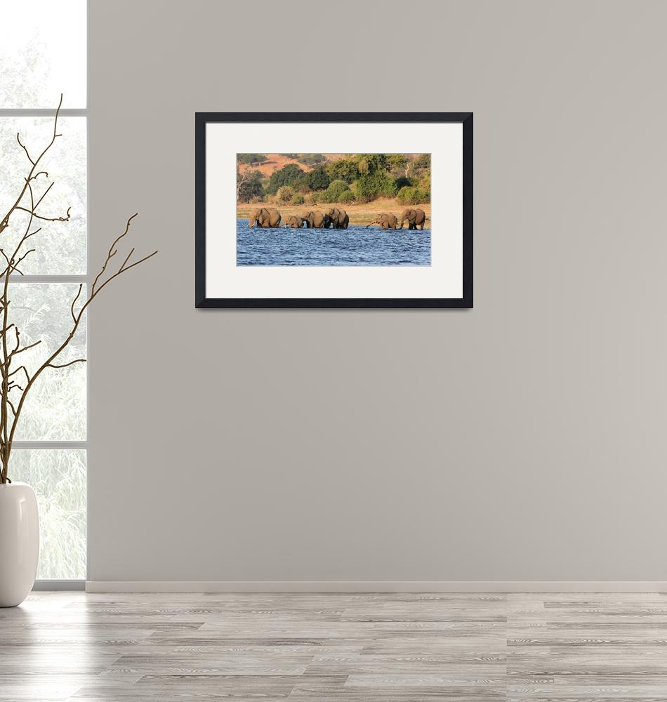 """""""Crossing the Chobe River 5737""""  (2013) by rayjacque"""