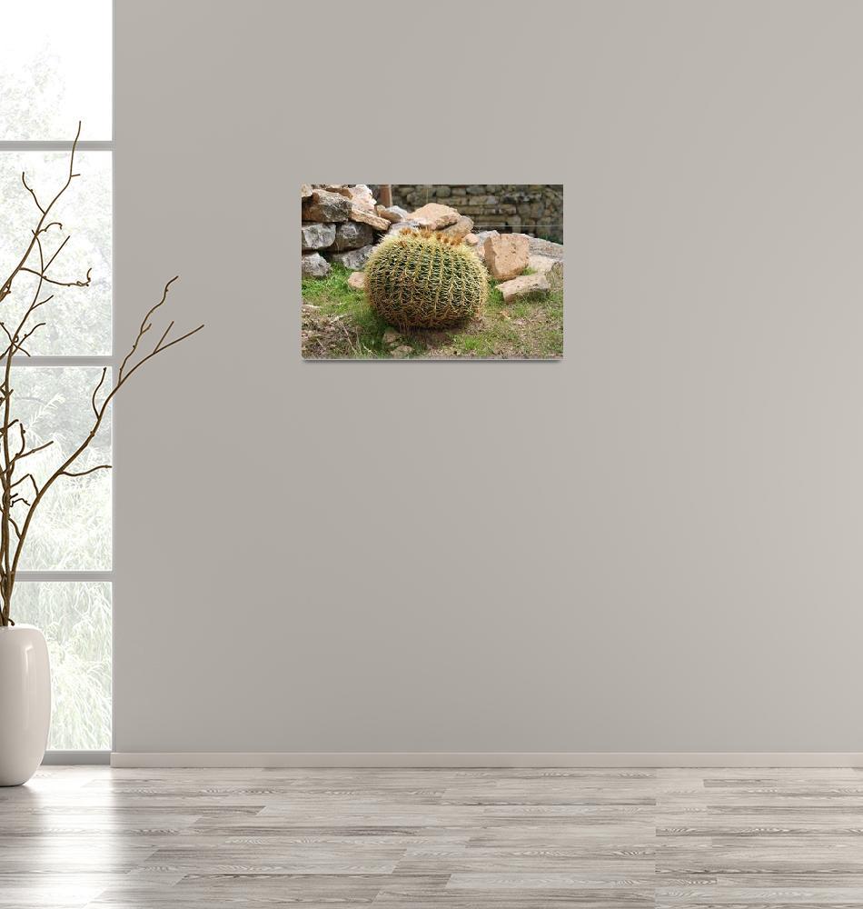 """Golden Ball cactus, Majorca""  (2018) by DavidFowler"