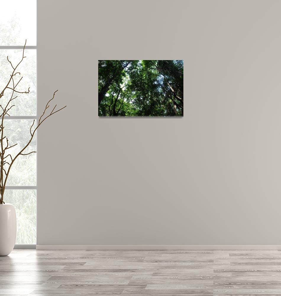 """Rain forest""  (2009) by Jason3000AD"