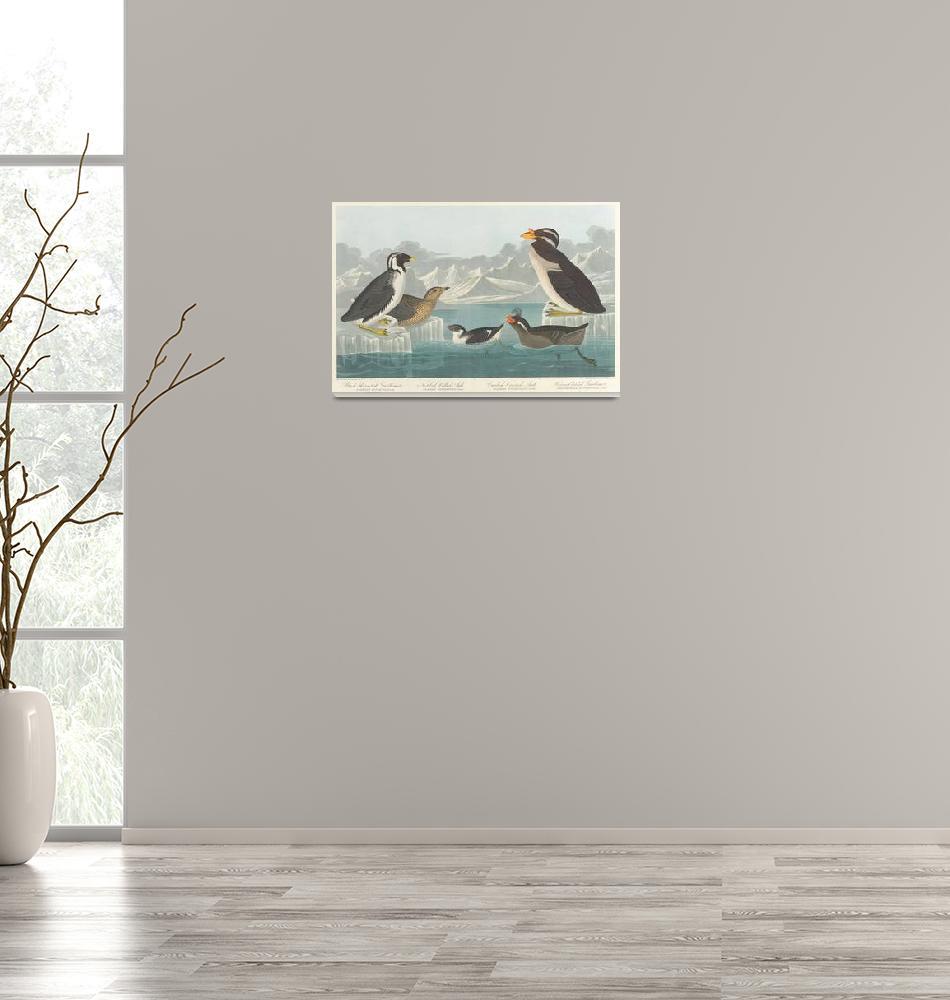 """Vintage Illustration of Penguin Breeds (1838)""  by Alleycatshirts"