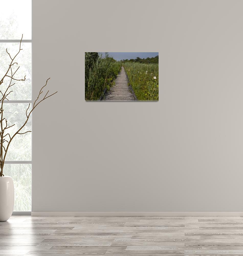"""Wetlands Boardwalk 1P""  (2019) by angelophotos"