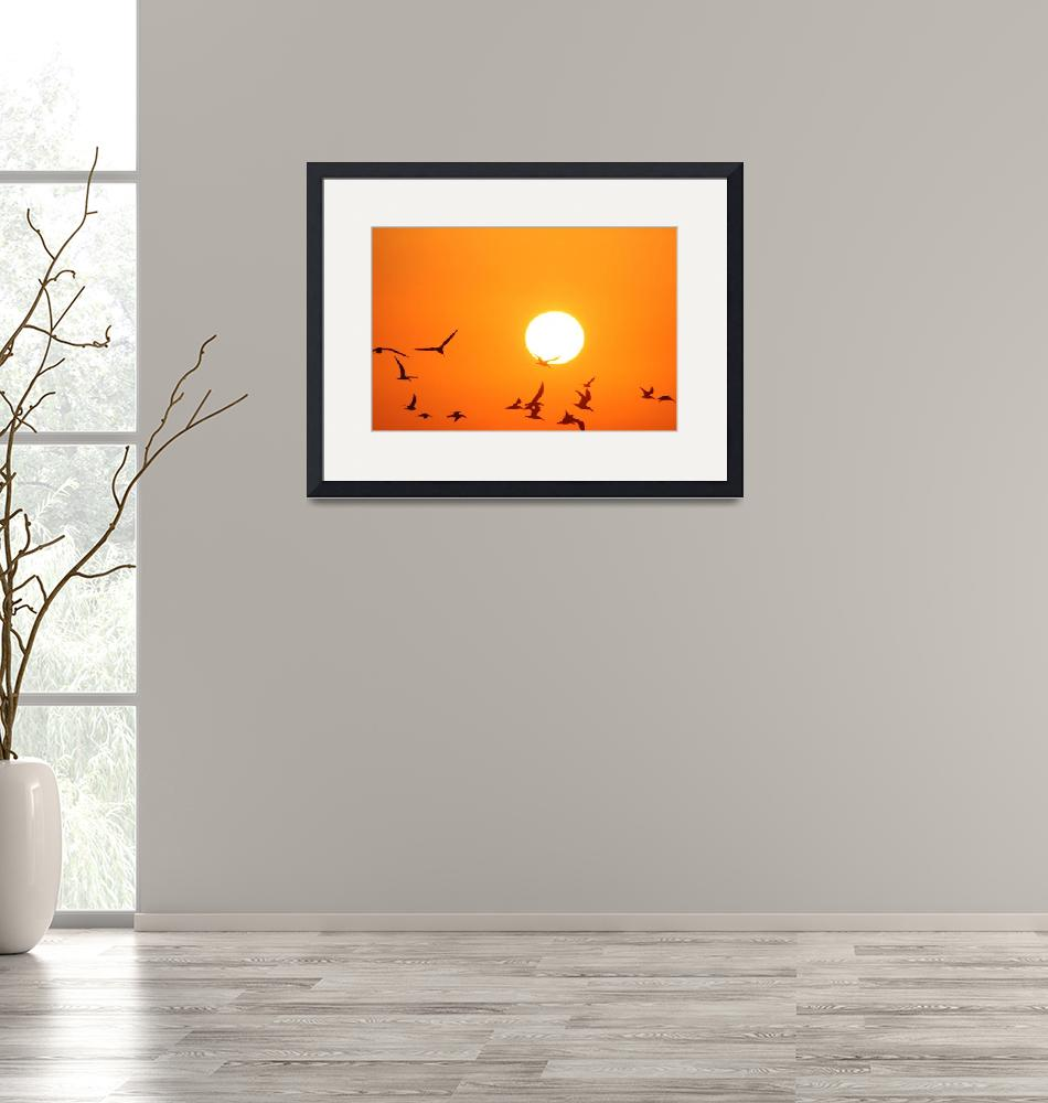 """""""Seagulls Flying Infront of the Sun""""  (2011) by DonnaCorless"""