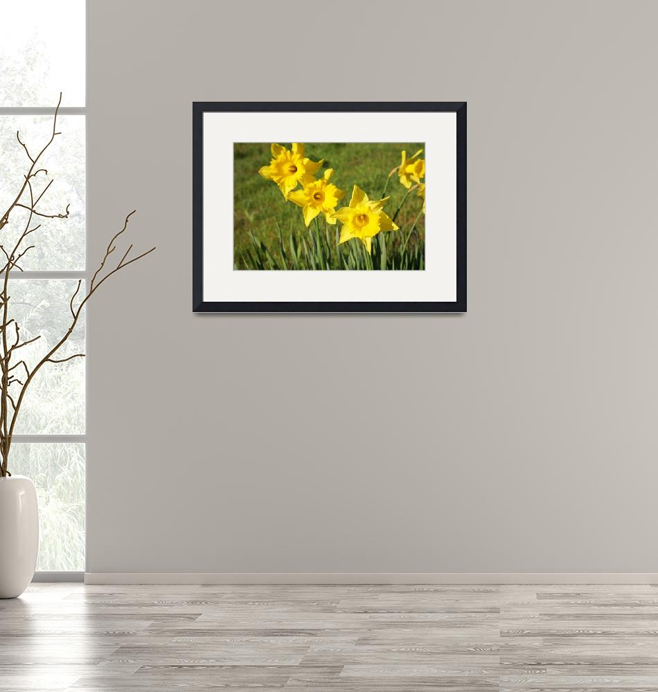 """Yellow Daffodils Flowers Meadow Field Spring""  (2014) by BasleeTroutman"