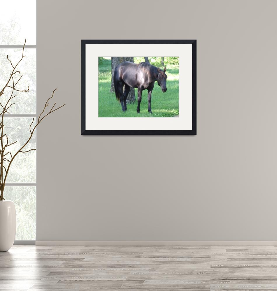 """""""Black Stallion""""  (2009) by Hartphotography"""