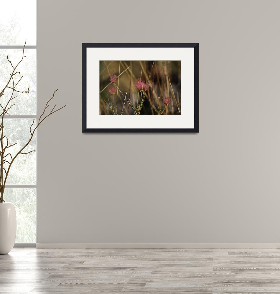 """""""Red Seed heads11"""" by Mac"""