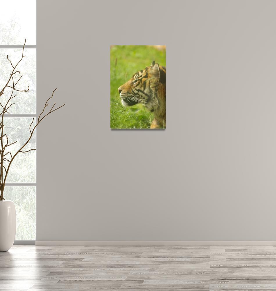 """Sumatran tiger""  (2009) by mellting"