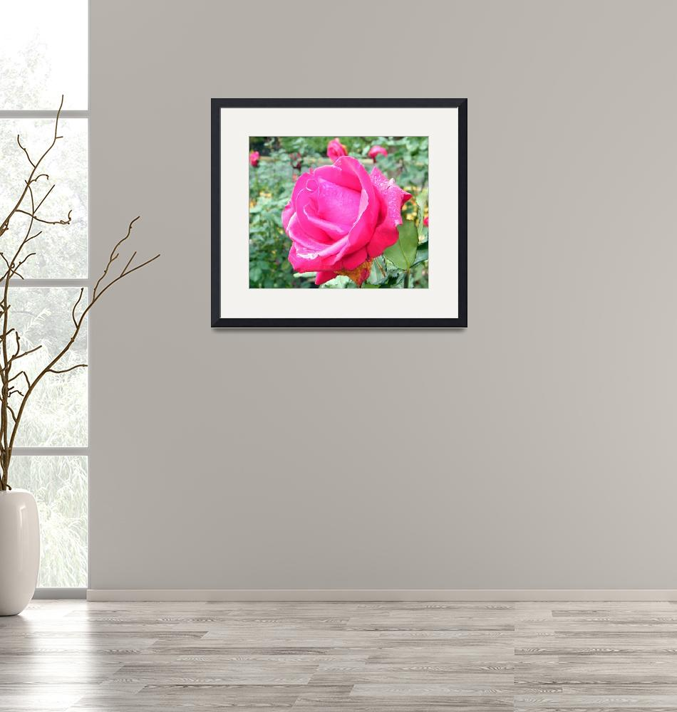"""""""Rose""""  (2008) by hudsons_photography"""