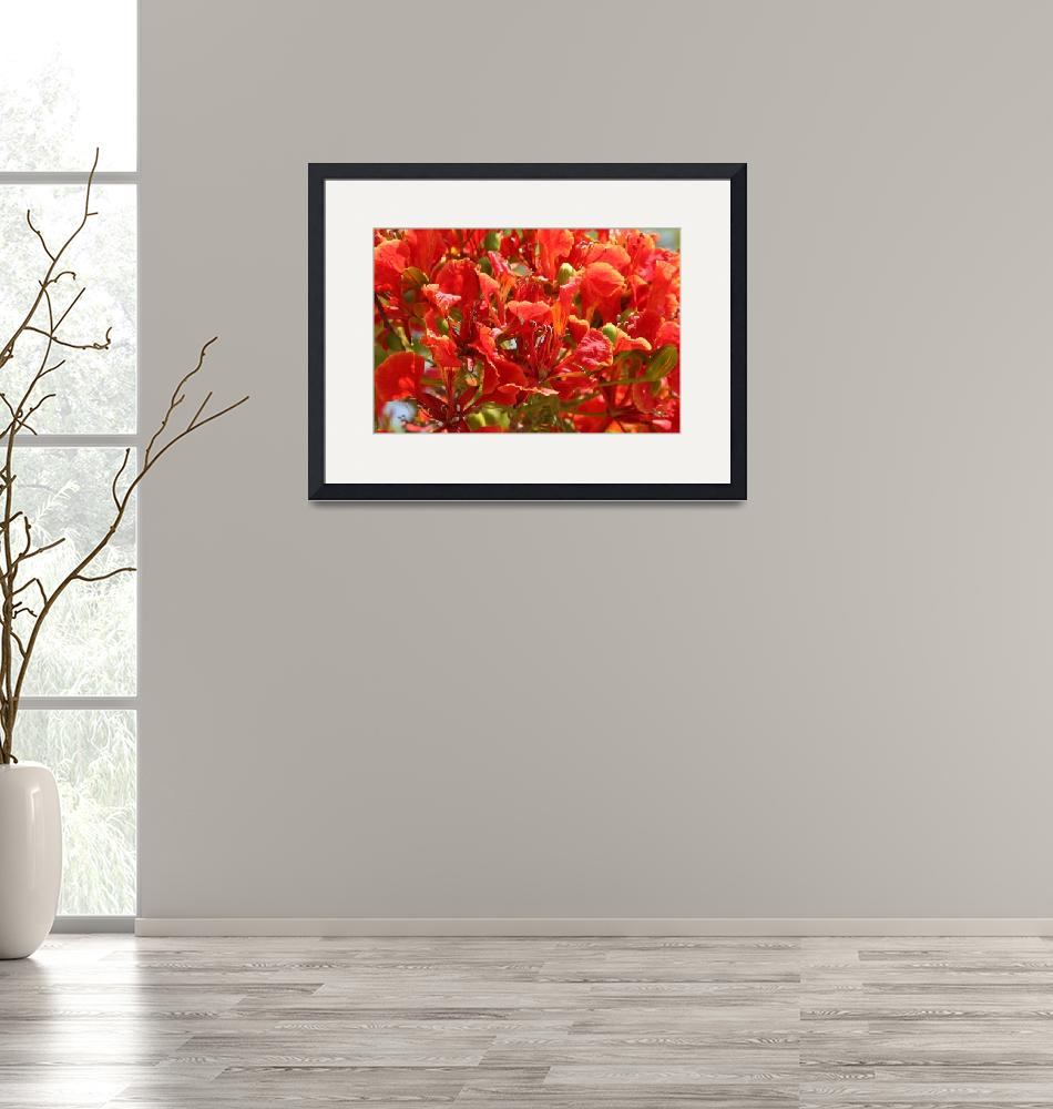 """""""Flame Tree Blooms""""  (2009) by DonnaCorless"""