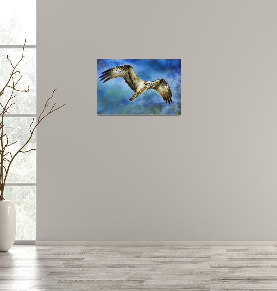 """Osprey Spiritual Journey""  (2015) by DBenoit"