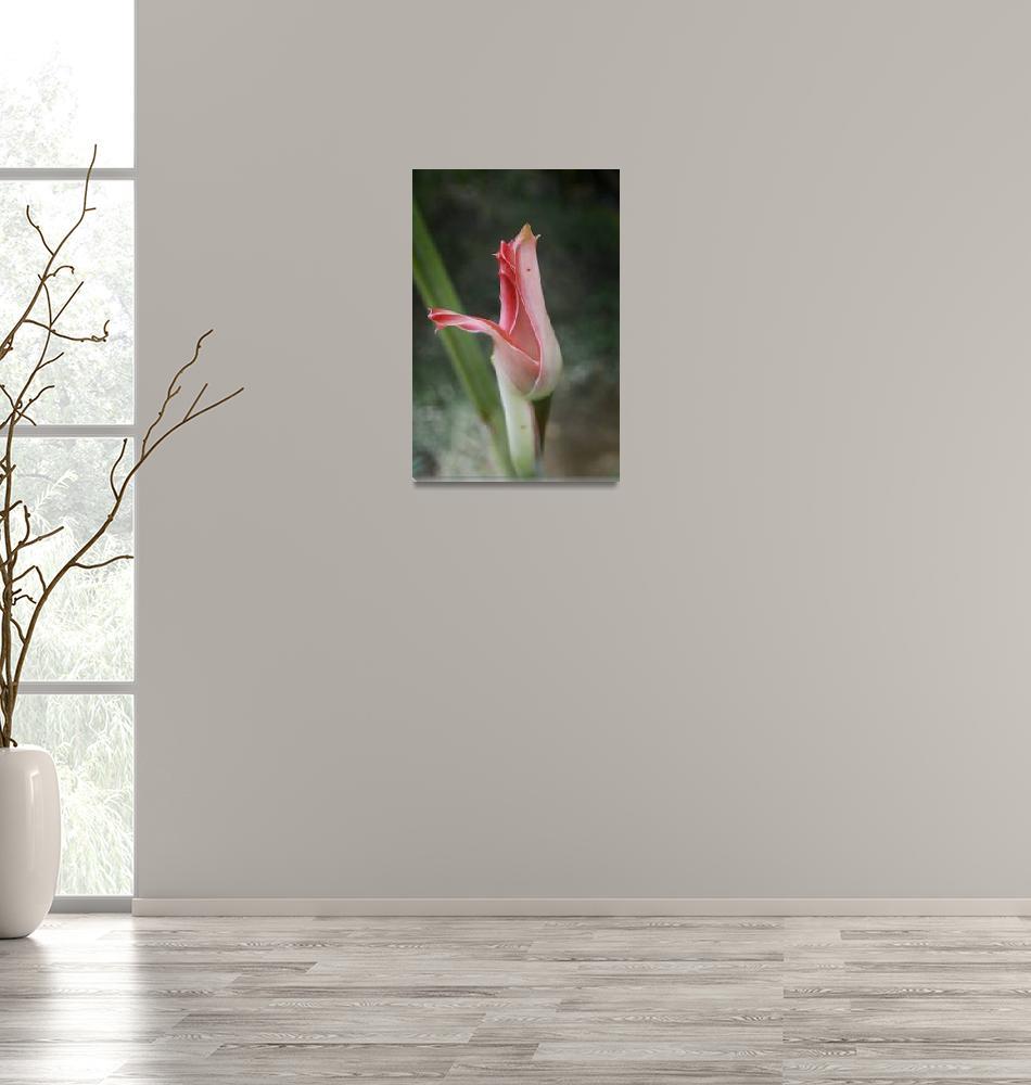 """Rosa Tropical""  by joanescodacodorniu"