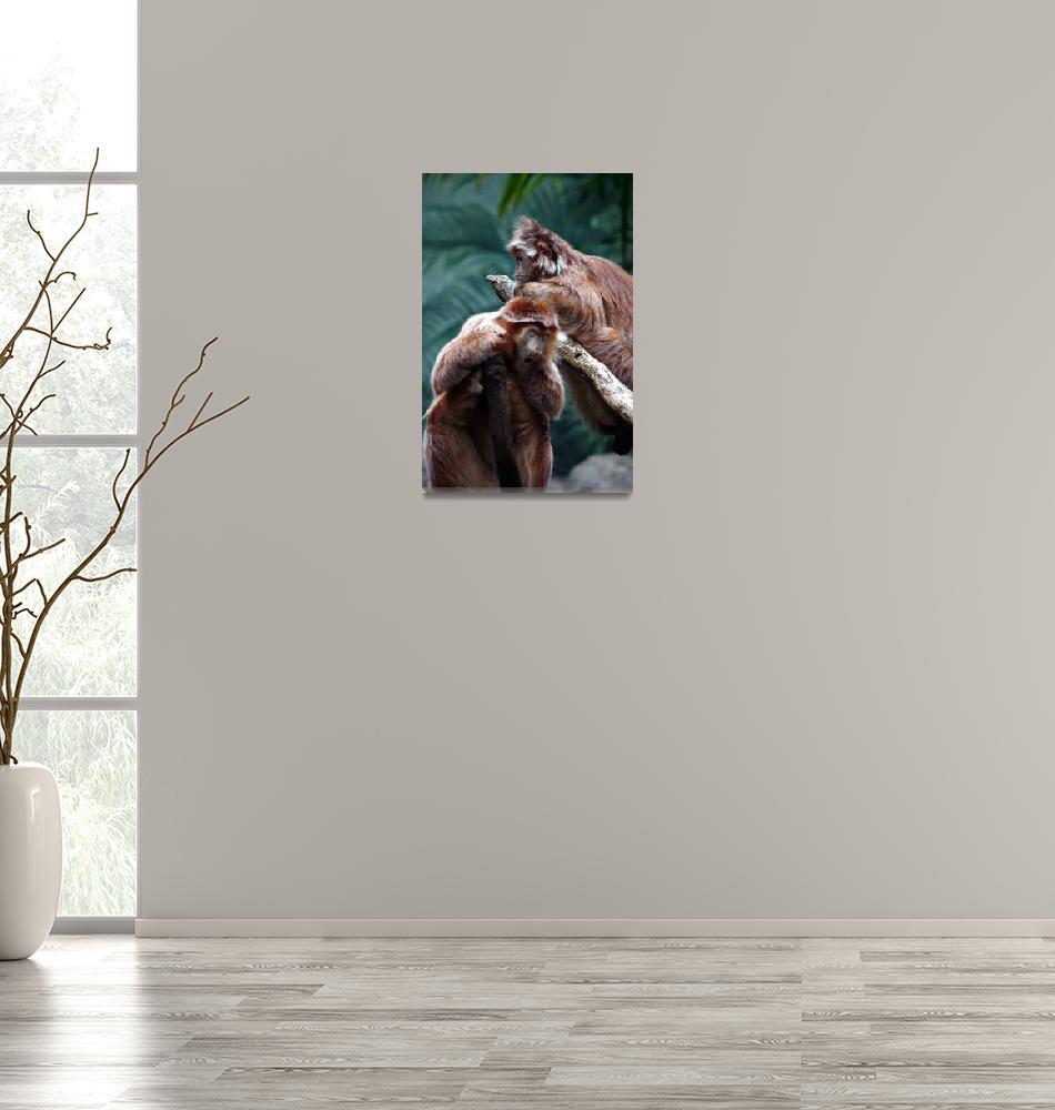 """Bored Primate""  (2010) by ImBaron"