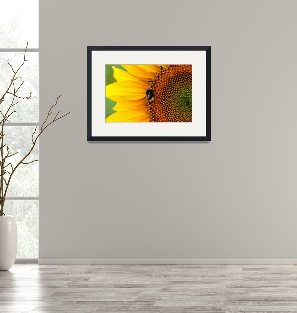 """""""Sunflower with bee""""  by Spangles44"""