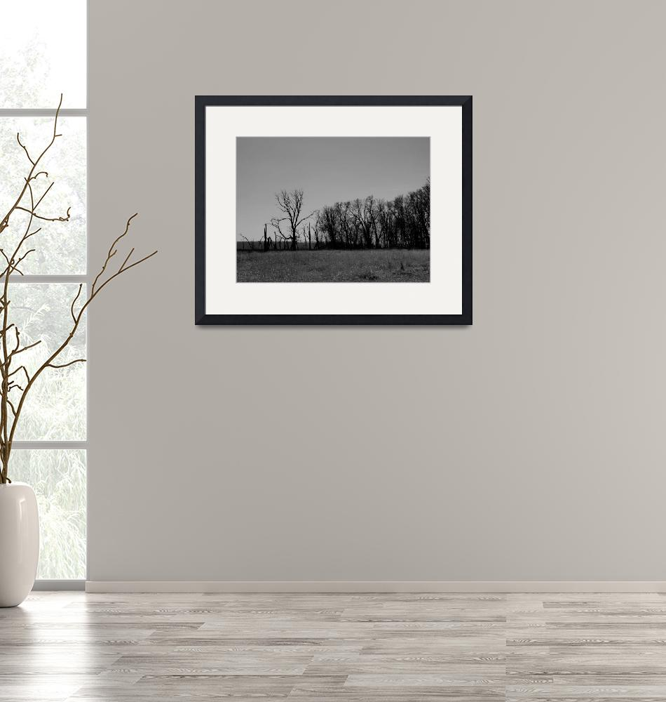 """""""winter landscape""""  (2009) by phototed"""