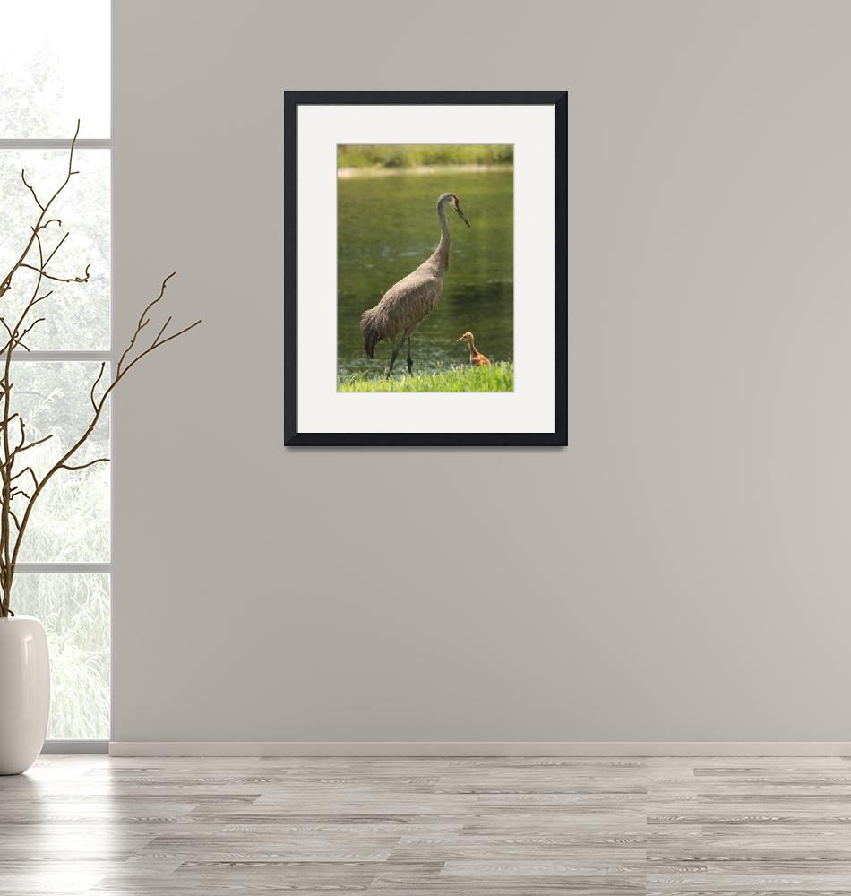 """""""Sandhill Crane with Baby Chick""""  by Groecar"""