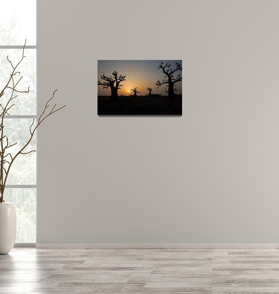 """Baobob Sunset""  (2009) by nothing"