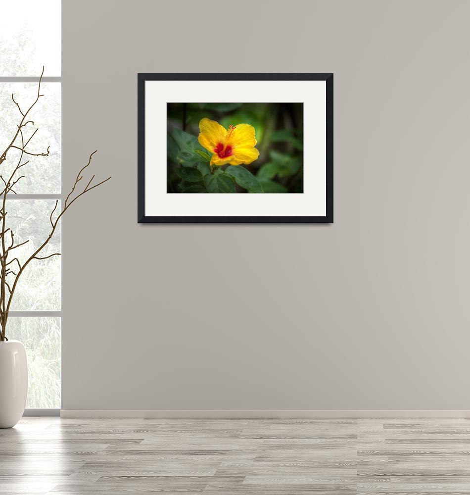 """""""Flower at the Garden of the Groves""""  (2009) by NJKPhotography"""