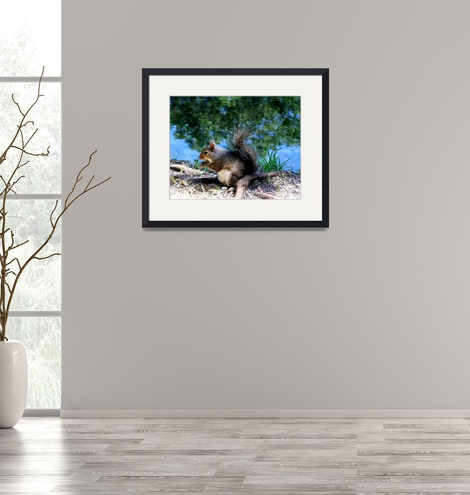 """""""Squirrel  Having Lunch By The Lake""""  (2008) by JoannHansen"""