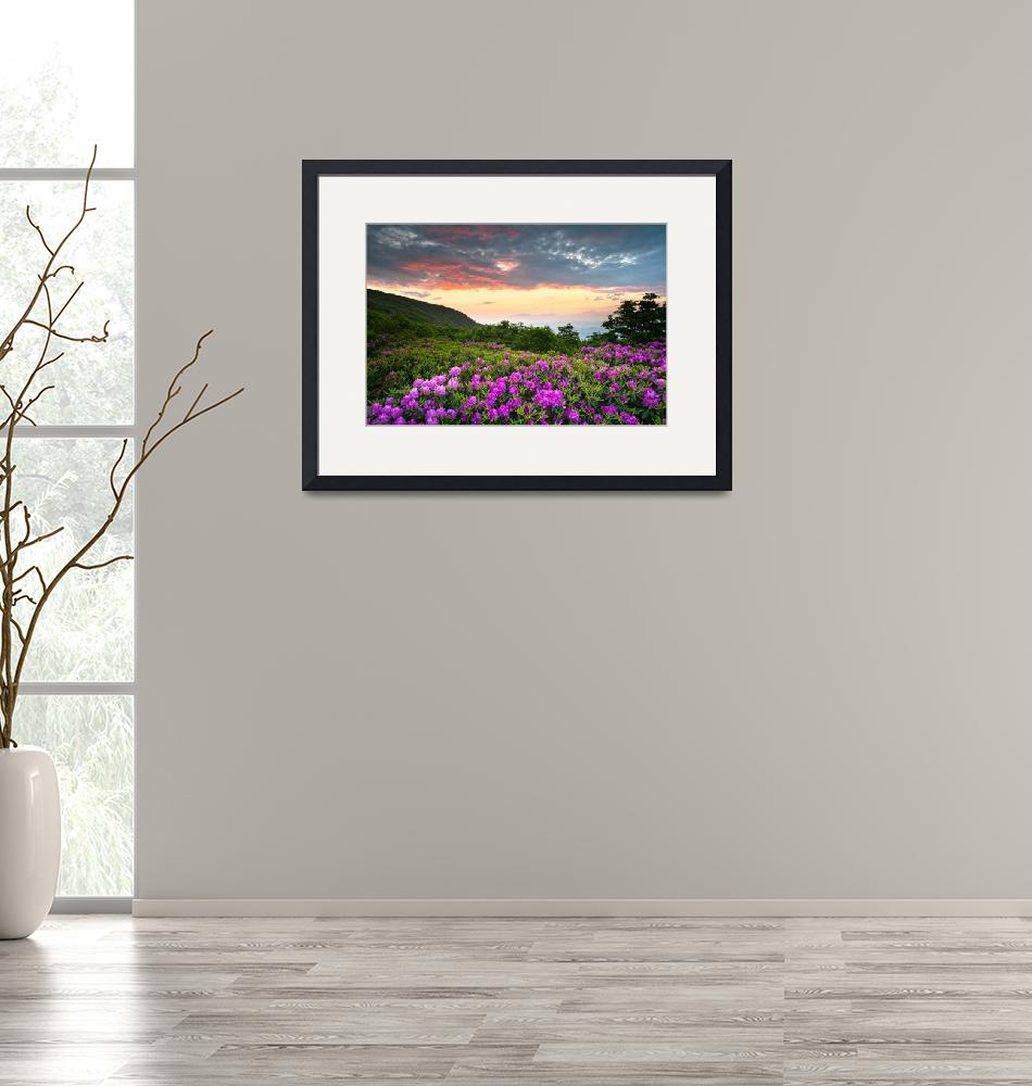 """""""Craggy Gardens Bloom - Rhododendron at Sunset"""" (2011) by DAPhoto"""