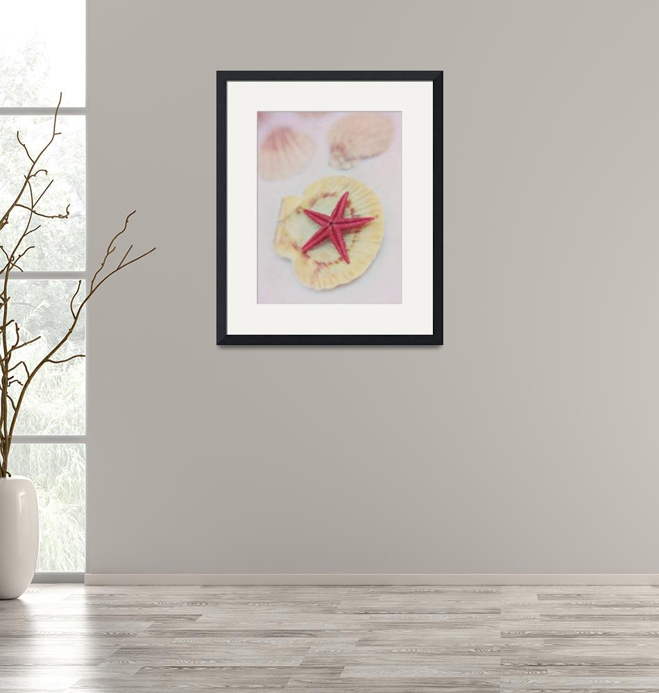 """little red starfish""  by Piri"