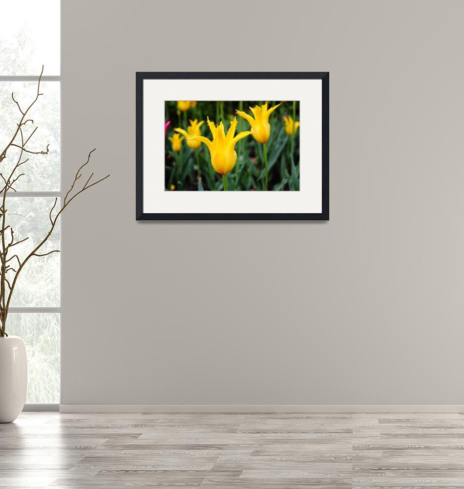 """Yellow Tulip""  (2009) by andreifilippov"