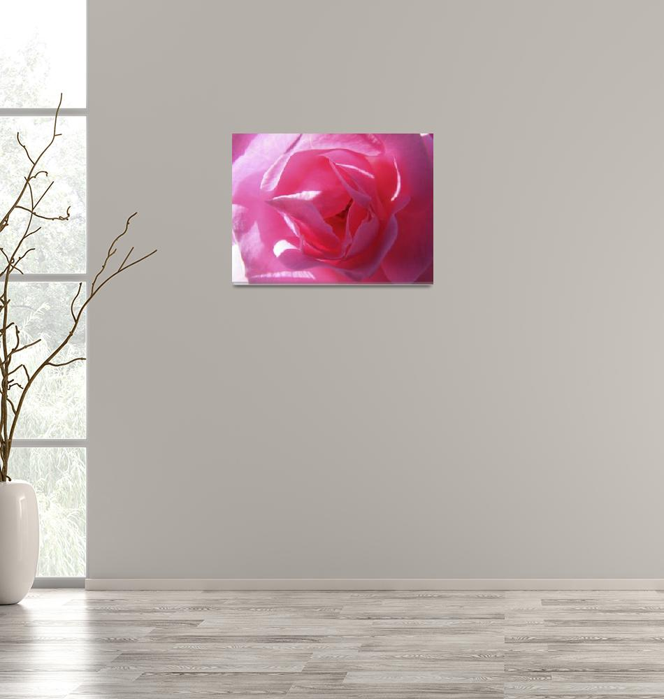 """A Perfect Pink Rose""  (2009) by Kimmary"