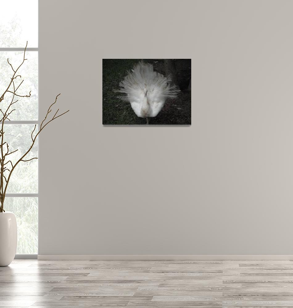"""White Peacock""  (2010) by Kibber"