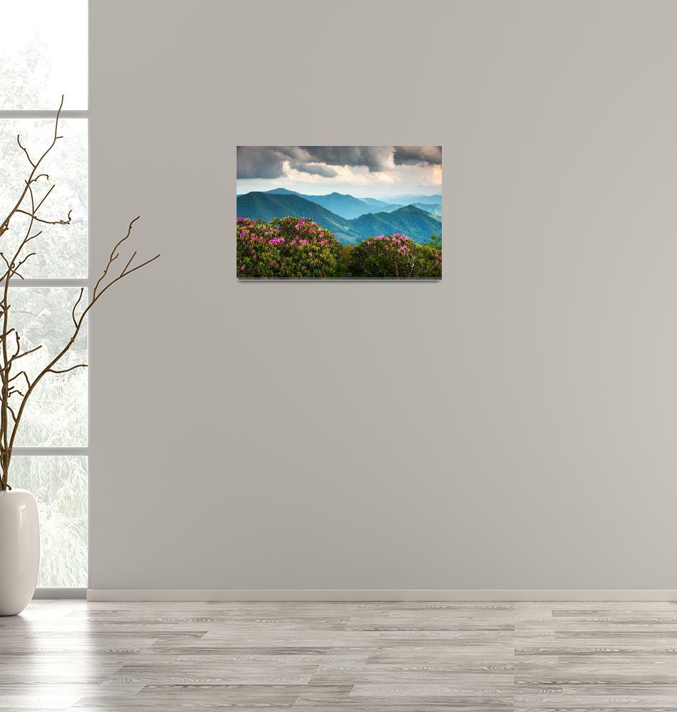 """Blue Ridge Appalachian Mountains Spring Flowers""  (2012) by DAPhoto"
