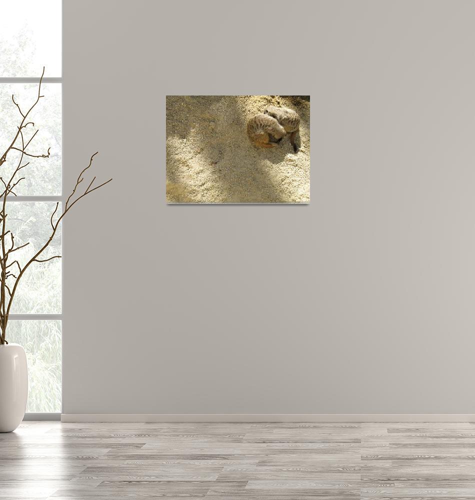 """Meerkats Cuddles""  by jess116"