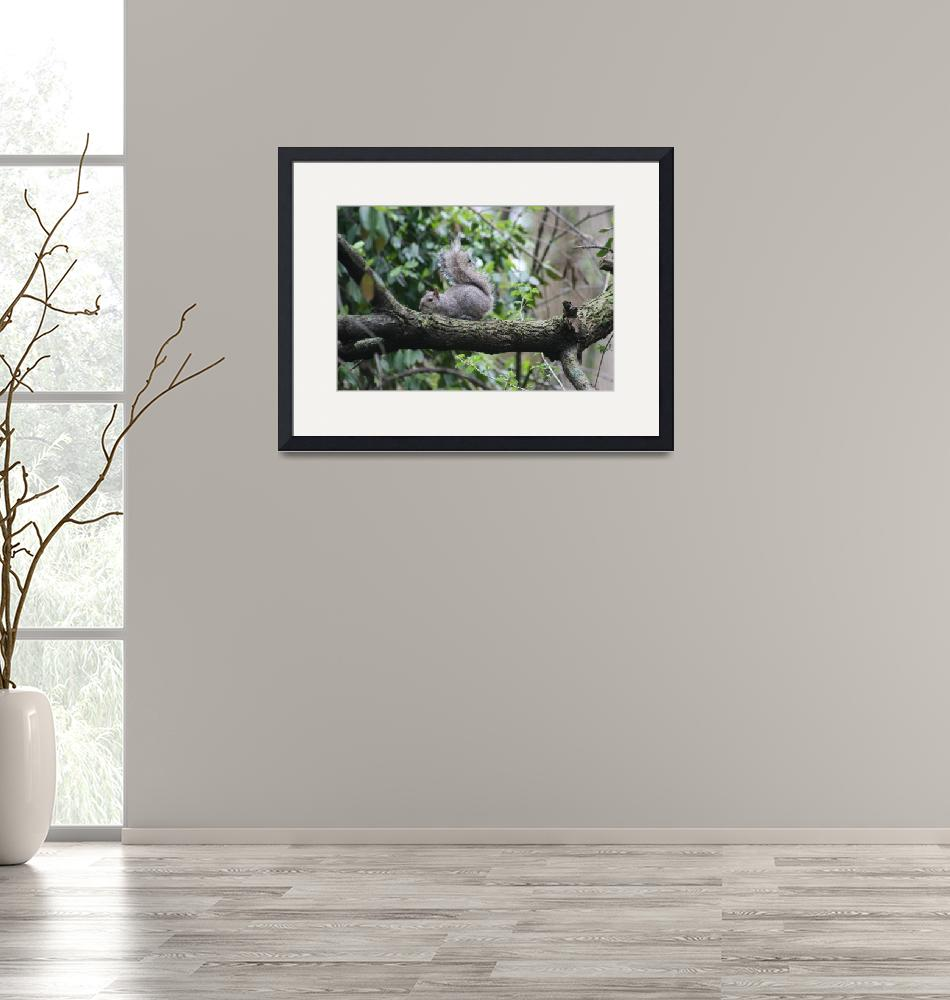 """""""Eastern Gray Squirrel I""""  (2020) by HighlandProductionsLLC"""
