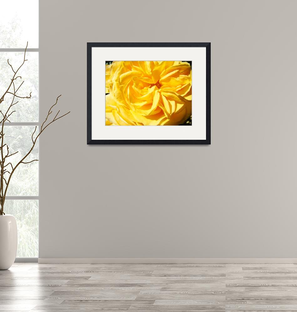 """Rose Spiral Flower art prints Baslee Troutman""  (2011) by BasleeTroutman"