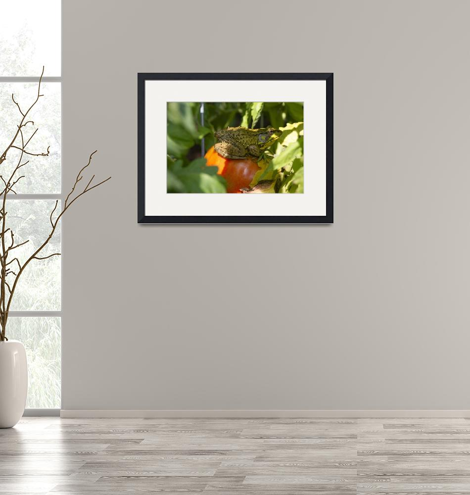 """""""Frog on a tomato""""  (2019) by angelophotos"""
