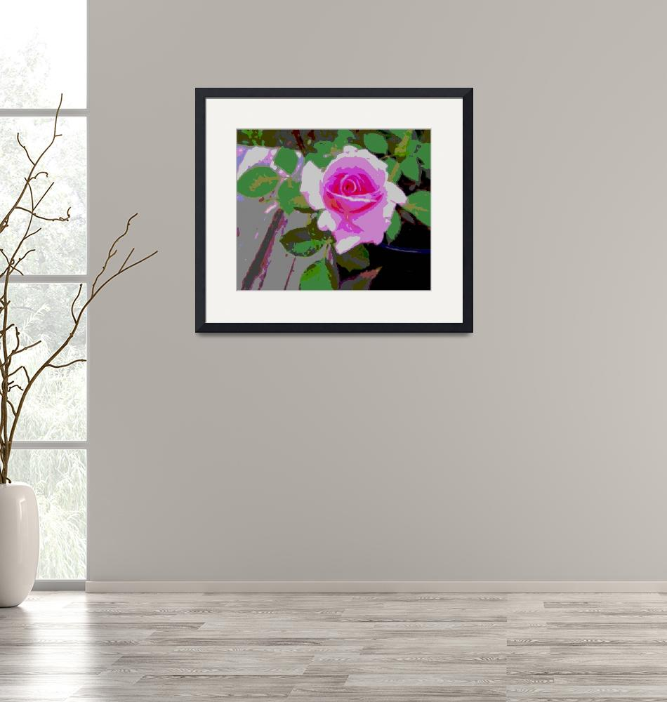 """""""Pink Potted Rose Enhanced"""" (2013) by TheNorthernTerritory"""