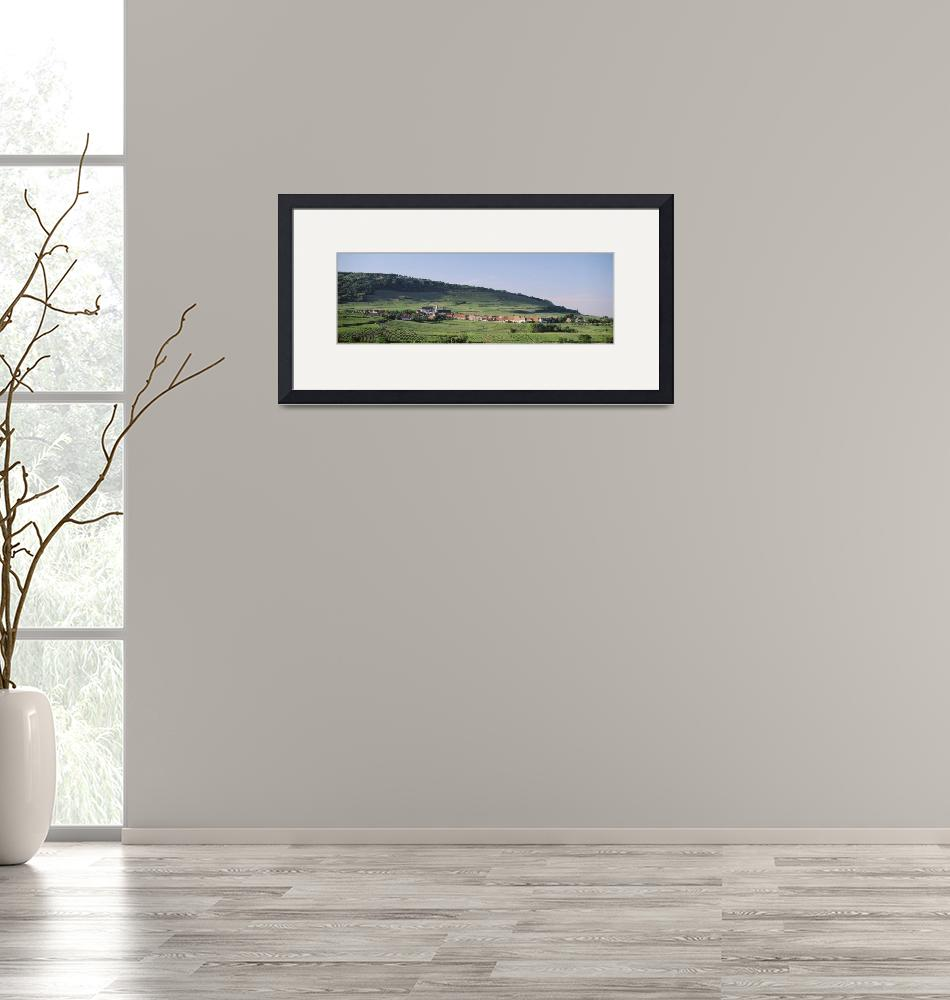 """""""Panoramic view of a vineyard""""  by Panoramic_Images"""