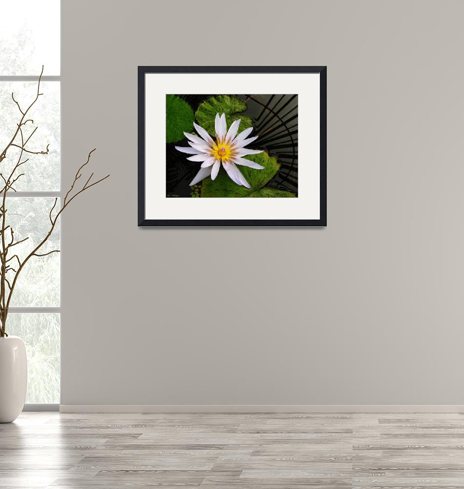 """""""White Waterlily on Green""""  by TheCandidImage"""