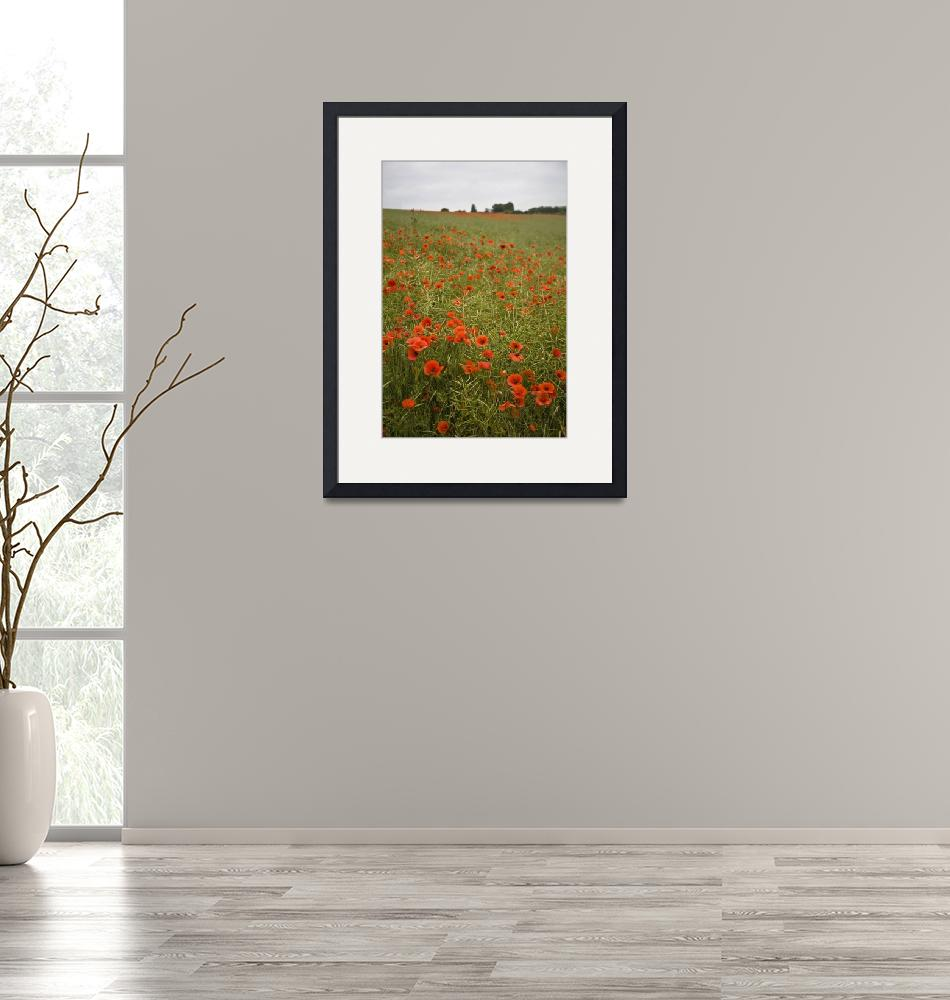 """""""Poppies""""  (2010) by michaelcarlucci"""