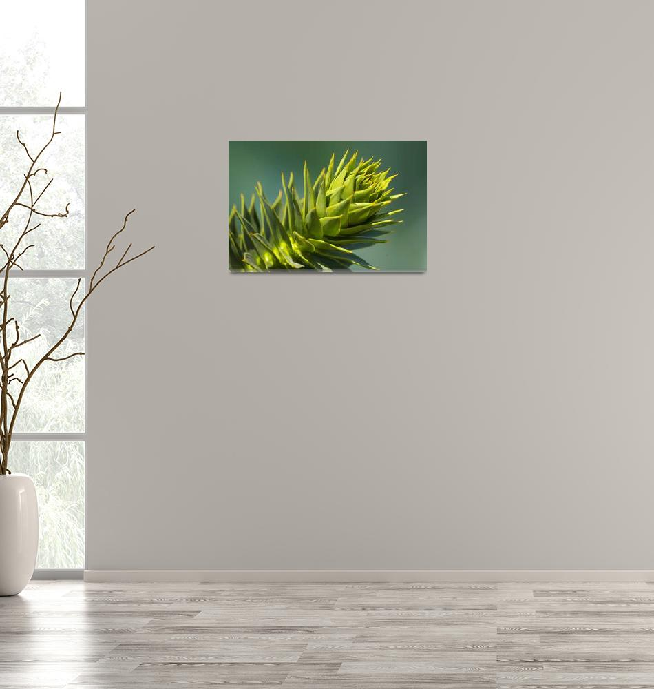 """""""Monkey puzzle""""  (2010) by mellting"""