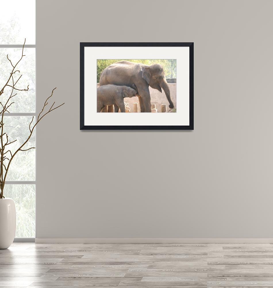 """Baby elephant nursing""  (2008) by hiratadigital"