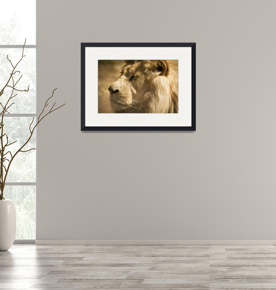 """Thorne Wildlife Collection Framed Print""  by buddakats1"