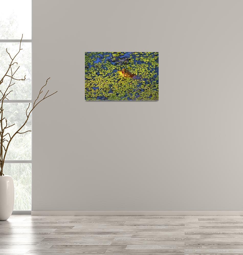 """Frog in Duckweed Pond""  (2013) by MindfulPhotog"