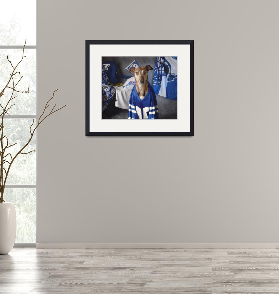 """Colts Fanatic""  (2007) by GreyhoundDave"