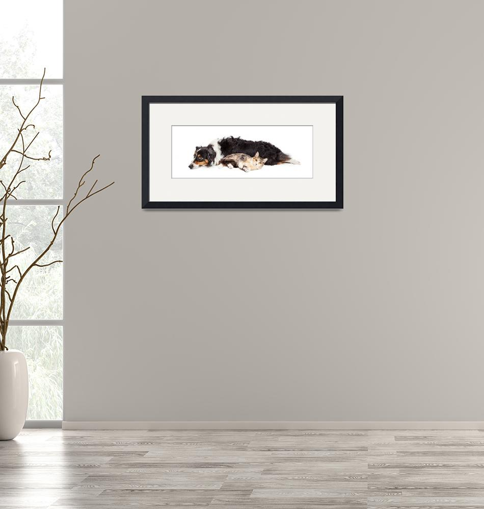 """Australian Shepherd Dog and Cat Laying Together""  (2016) by ADogsLifePhoto"