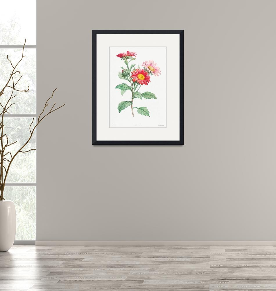 """""""Red Aster Vintage Botanical""""  by FineArtClassics"""
