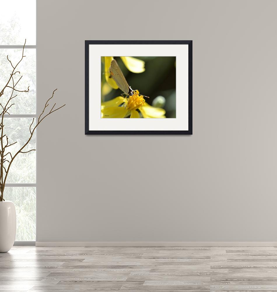"""""""Gray Butterfly with Yellow Flowers""""  (2012) by theblueplanet"""