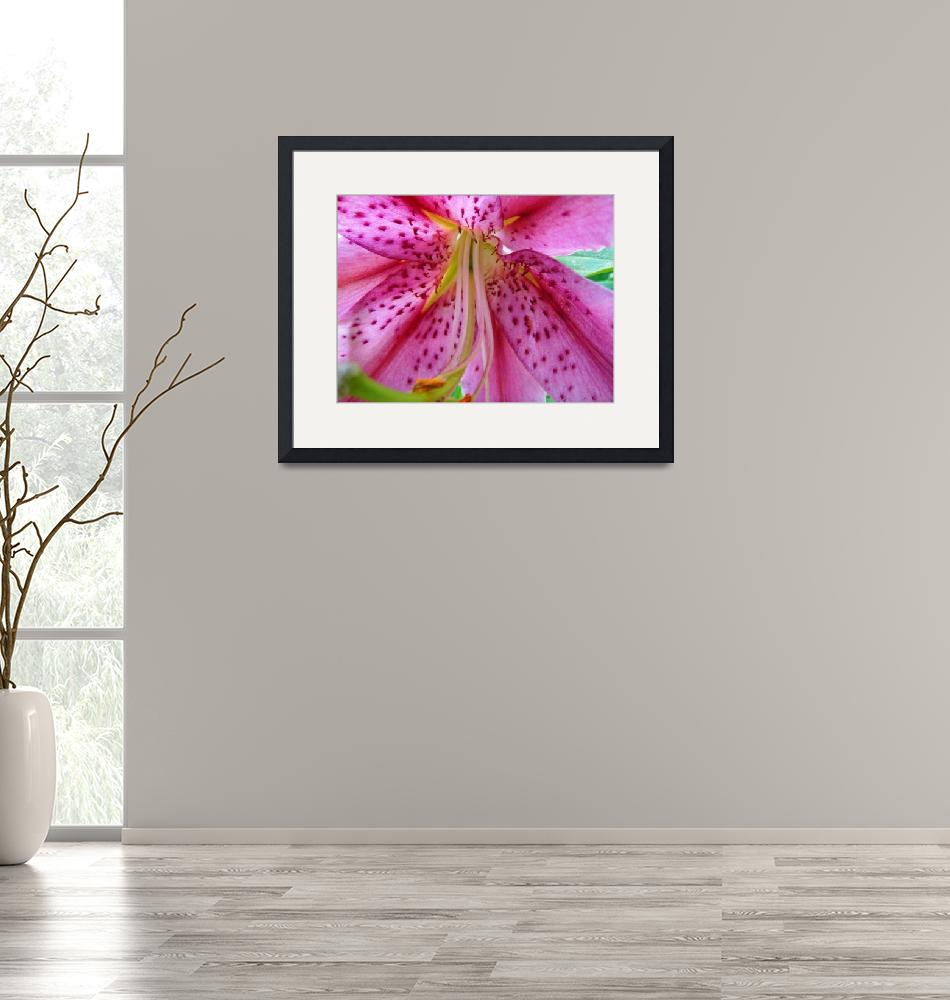 """""""Pink Lily 1""""  (2008) by MyHartArt"""