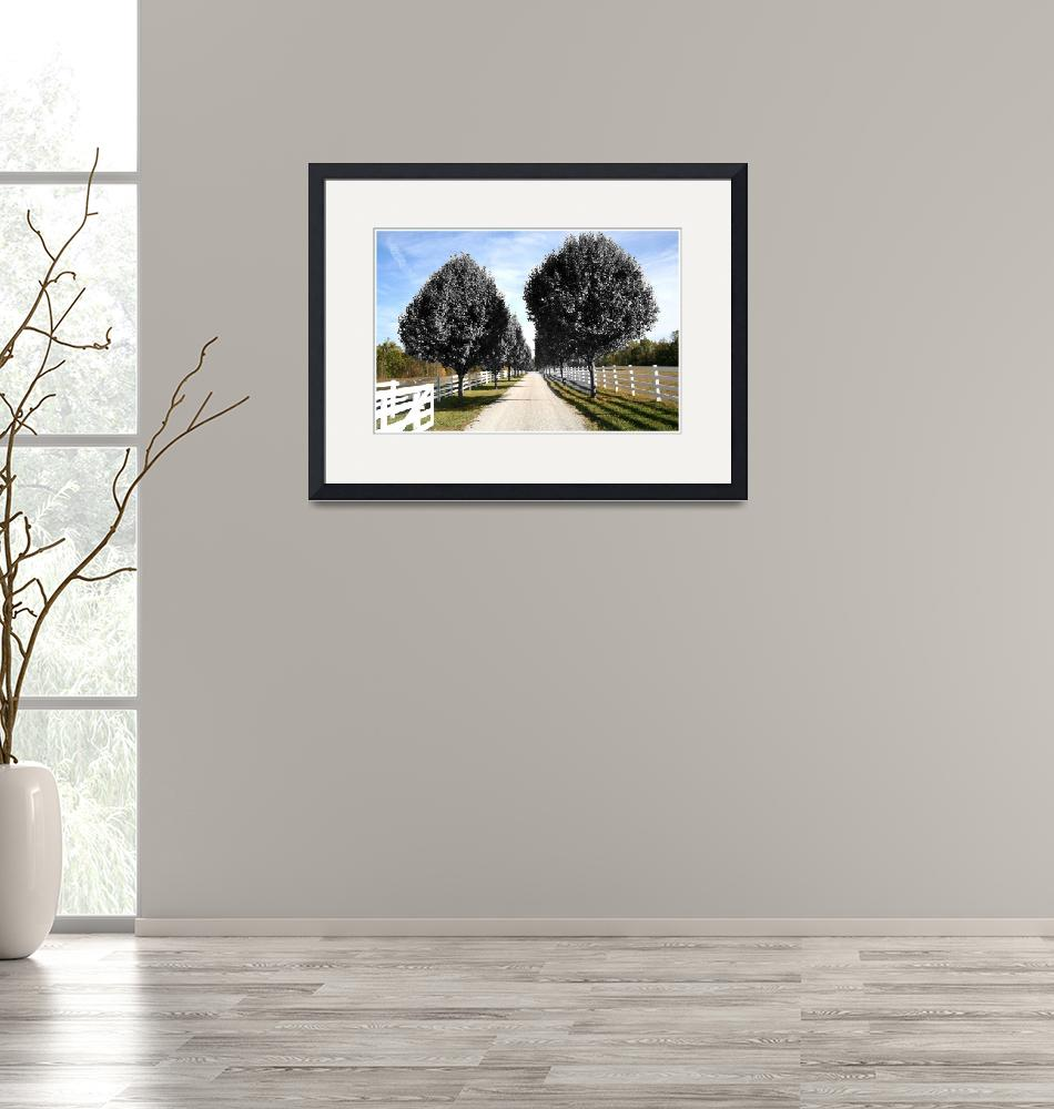 """""""trees country lane""""  by sherryswest"""