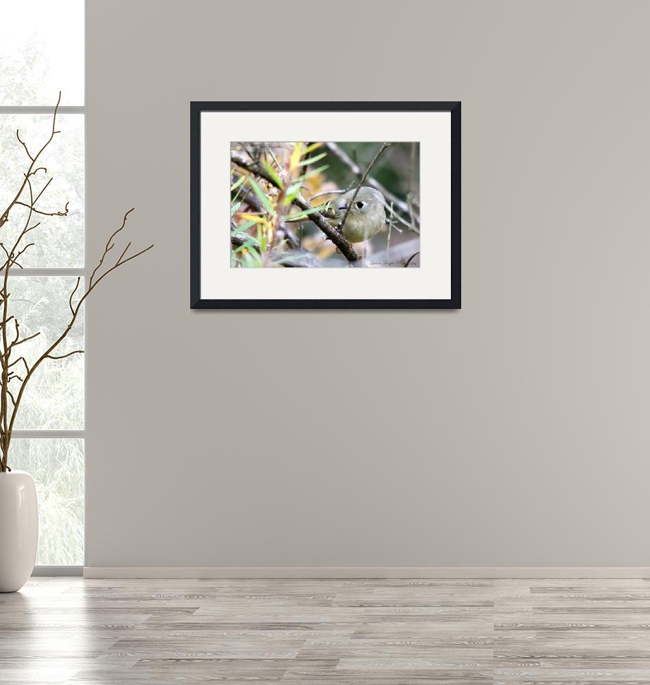 """""""Ruby-crowned Kinglet""""  (2012) by WildAboutNaturePhotography"""