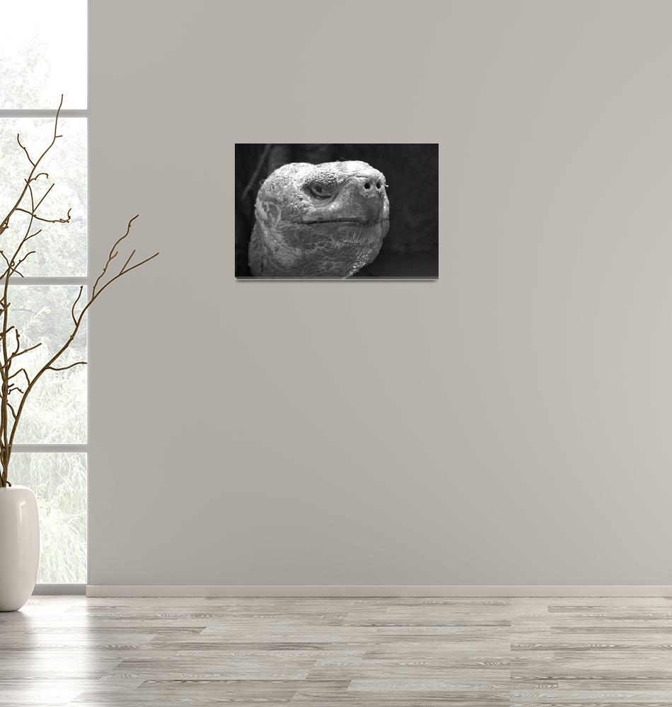"""""""Turtle Face""""  (2008) by curtis-doell-photography"""